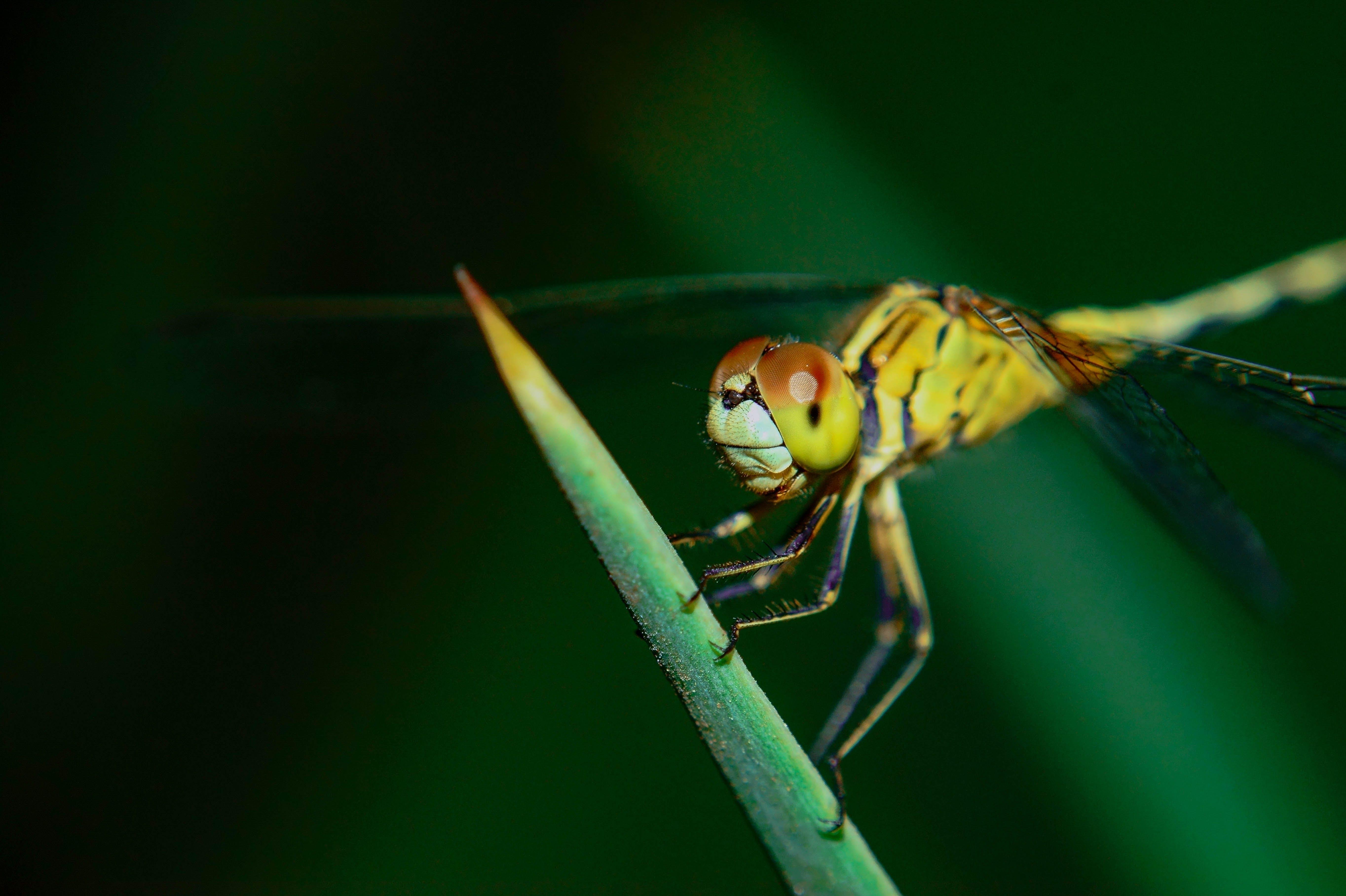 Free stock photo of #nature, #outdoorchallenge, #urban, #yellow