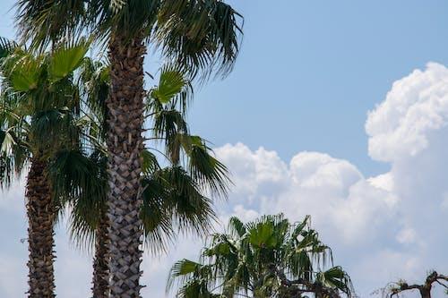 구름, 나무, 야자나무, 자연의 무료 스톡 사진