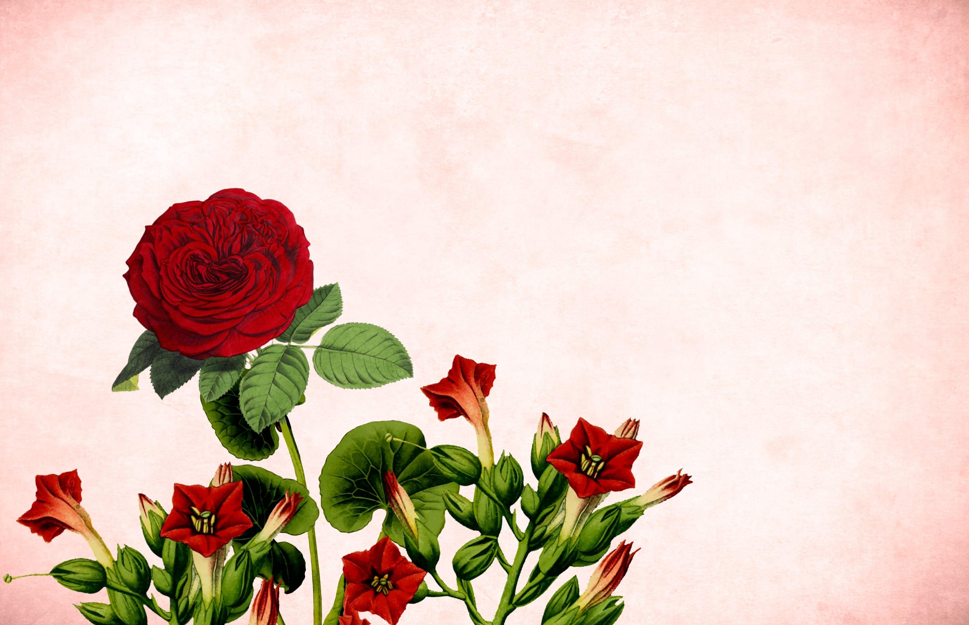 Free stock photo of art, bouquet, card, celebration