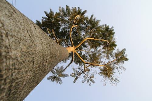Kostnadsfri bild av grenar