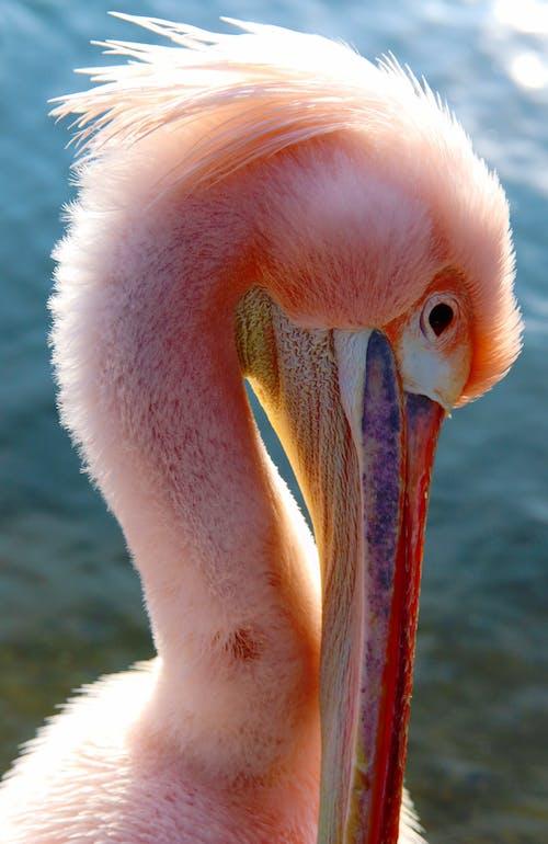 Immagine gratuita di colori luminosi, lago, londra, uccello