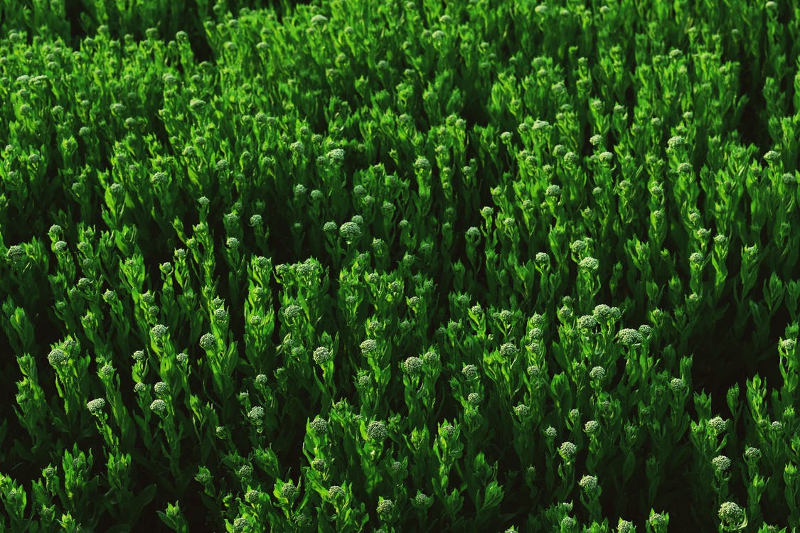 agricoltura, ambientale, ambiente