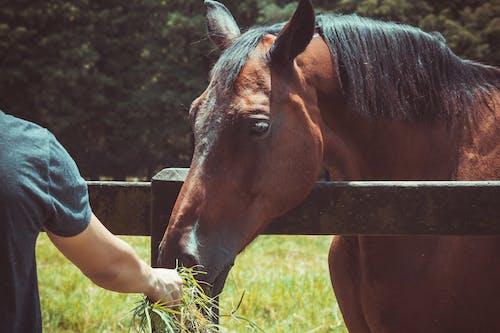 Kostnadsfri bild av bete, bondgård, boskap, däggdjur