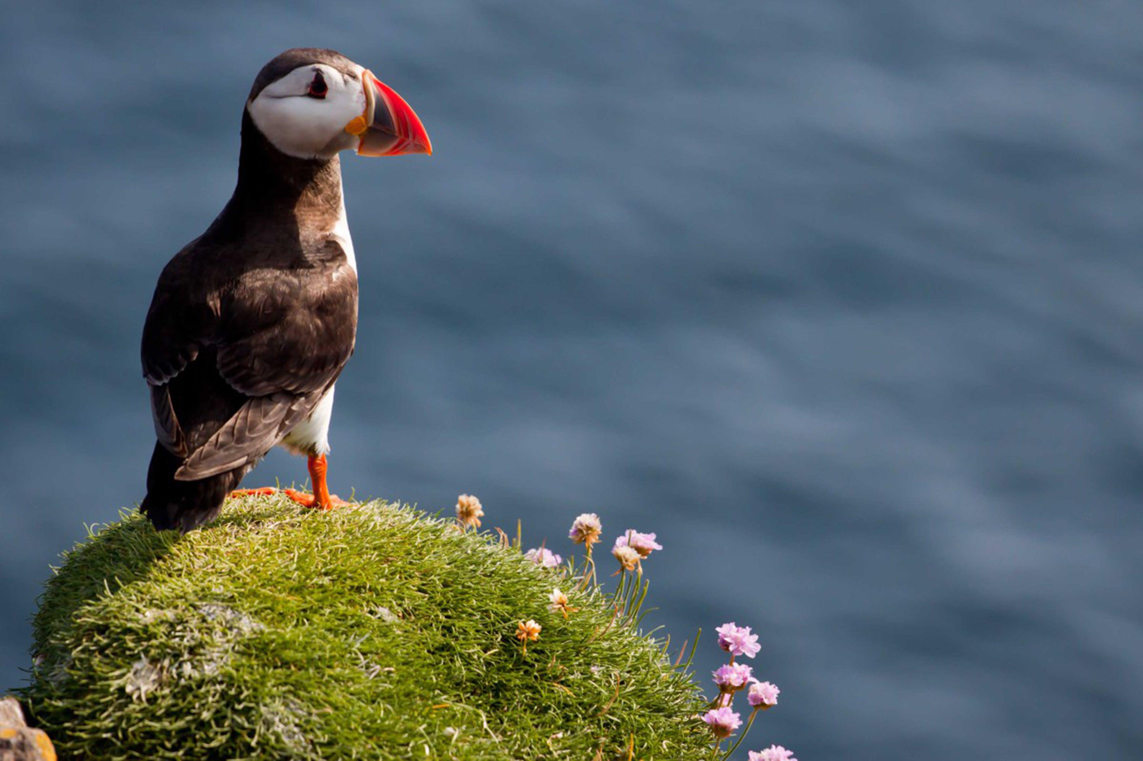 Free stock photo of sea, bird, scotland, atlantic