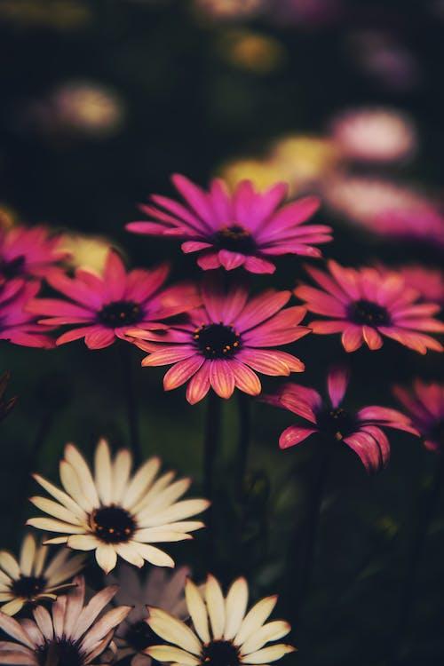 berkembang, bunga-bunga, flora