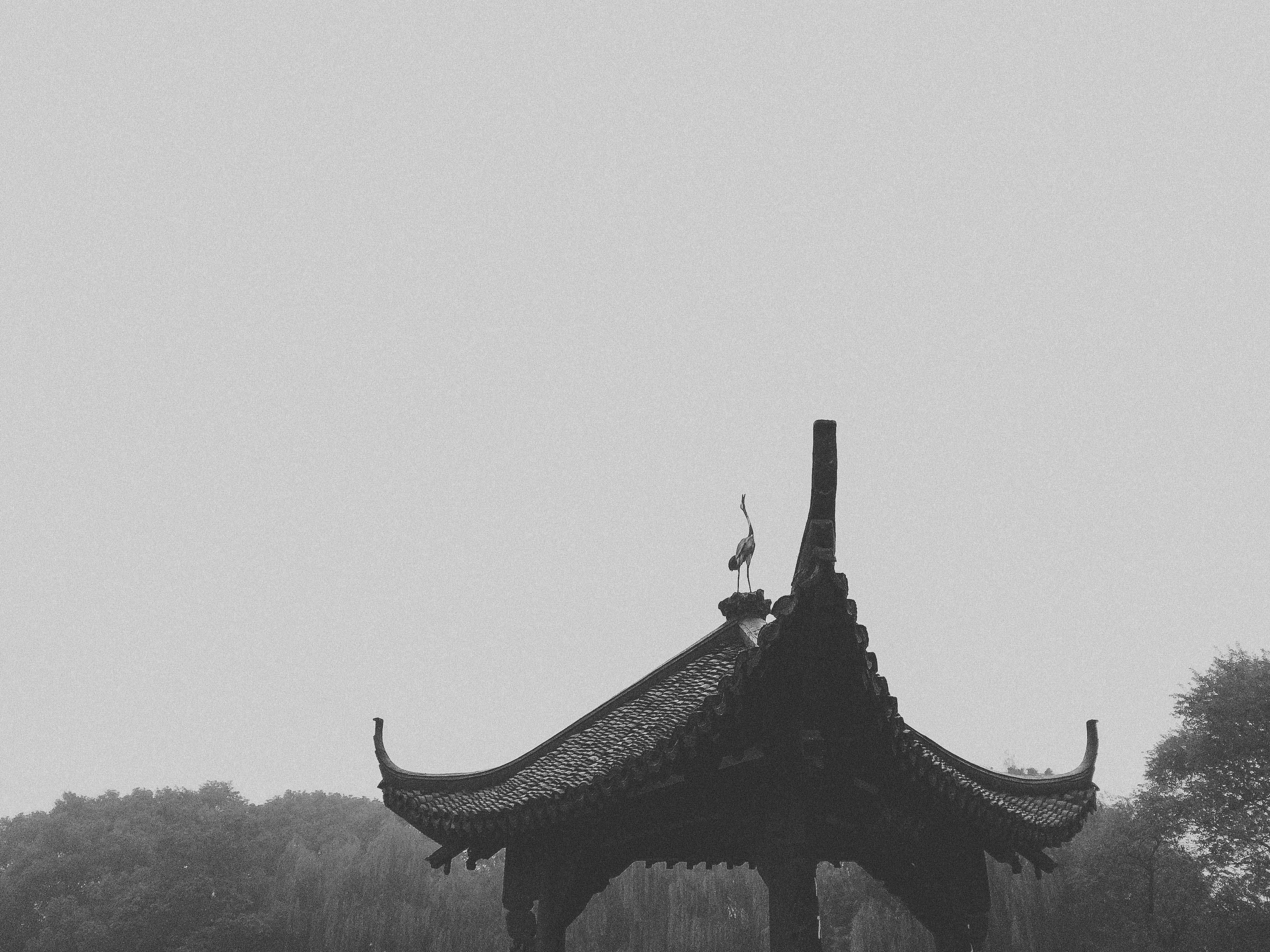 Free stock photo of architecture, black, black and white, black white