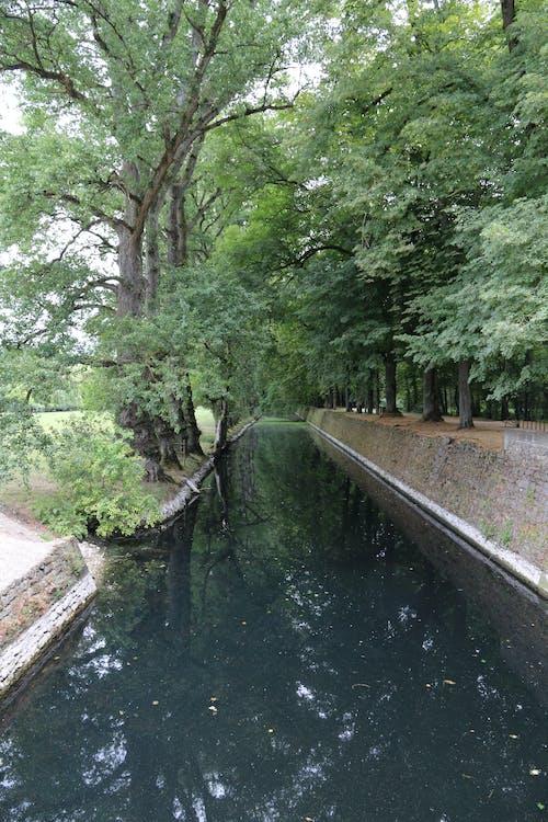 Imagine de stoc gratuită din apă, codru, verde