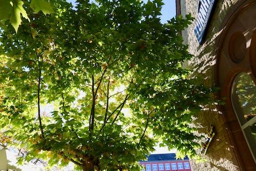 Imagine de stoc gratuită din lumină, soare, verde
