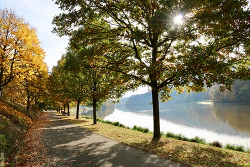 Imagine de stoc gratuită din lumină, natură, soare, verde