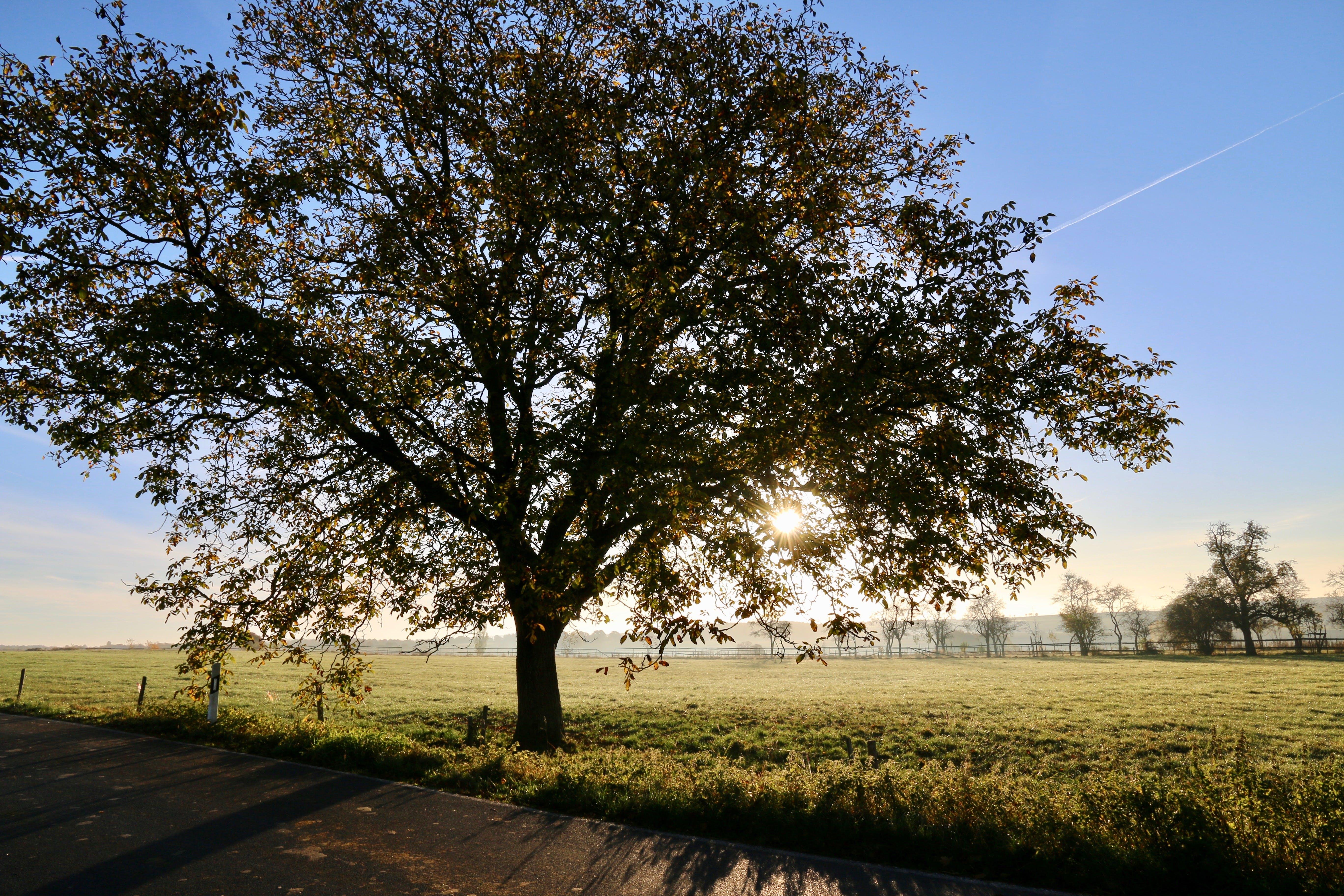bright, countryside, dawn