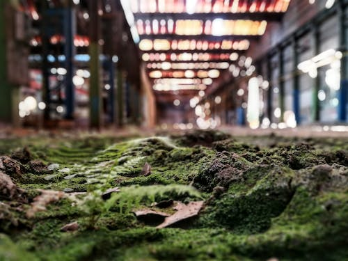 Free stock photo of architecture, green, ground, urbex