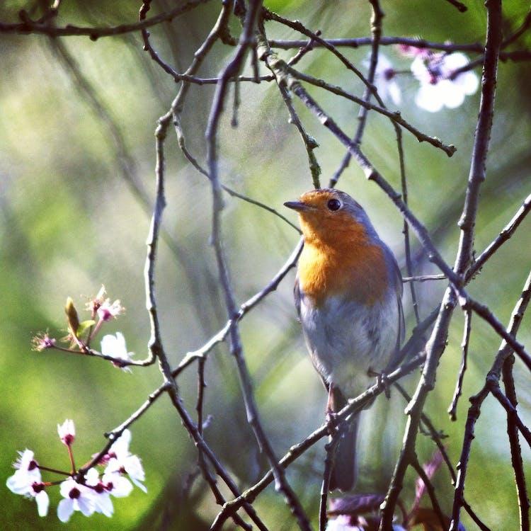 #robin #bird #wildlife #birdwatching