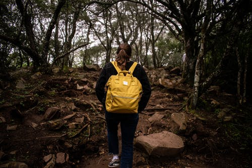 Free stock photo of #yellow, Argentina, bag, jungle