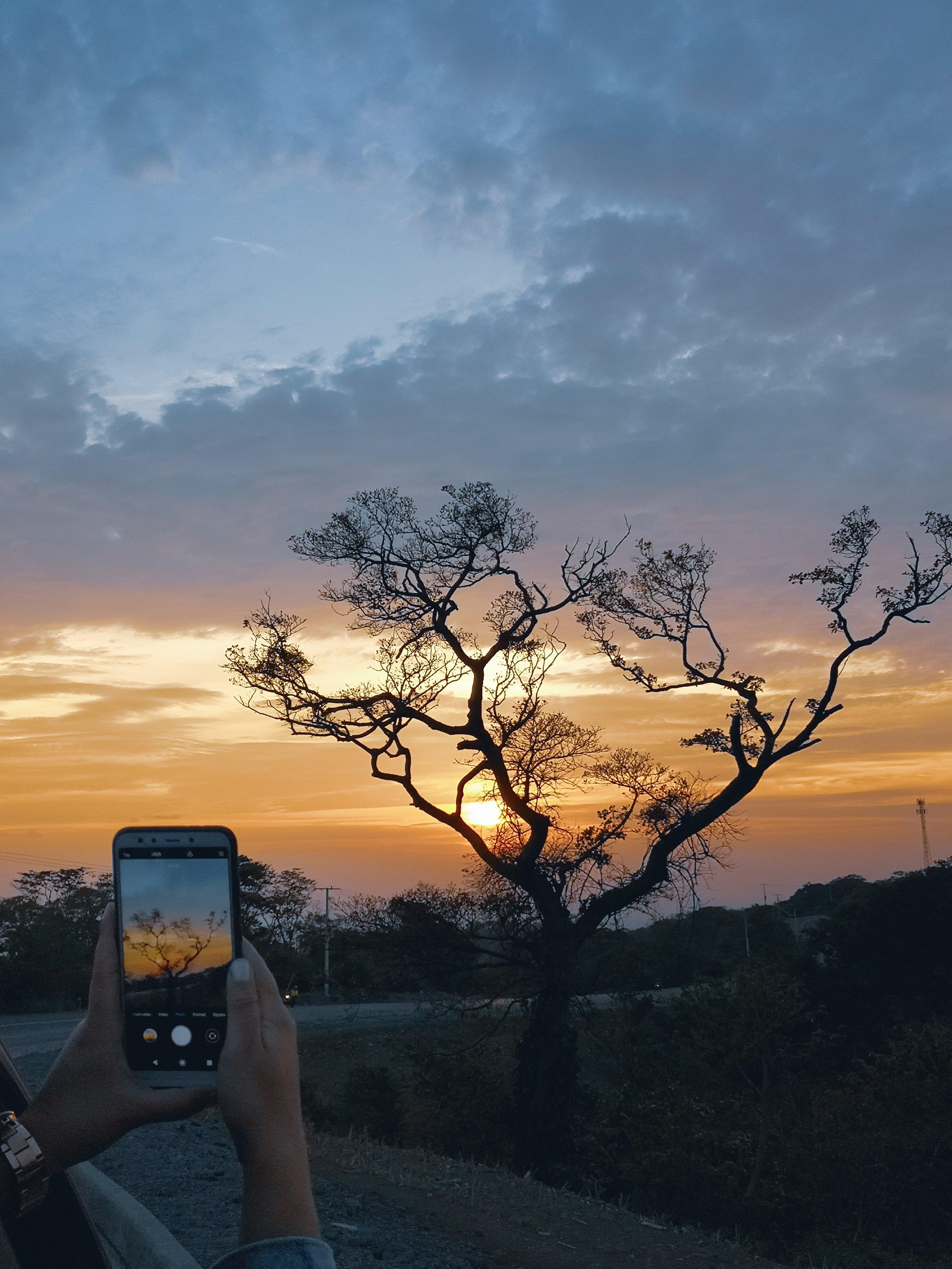 Kostnadsfri bild av # huaweip20, #flicka, #fotografi, #mobilechallenge