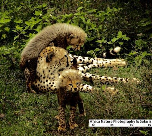 Kostnadsfri bild av ngorongoro krater, serengeti, tanzania turer