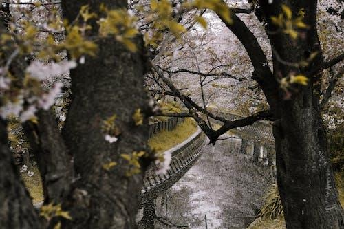 Ingyenes stockfotó ág, évszak, fa, folyó témában