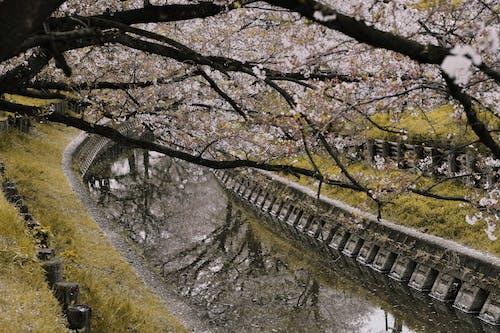 Gratis stockfoto met bloemen, boom, flora, jaargetij