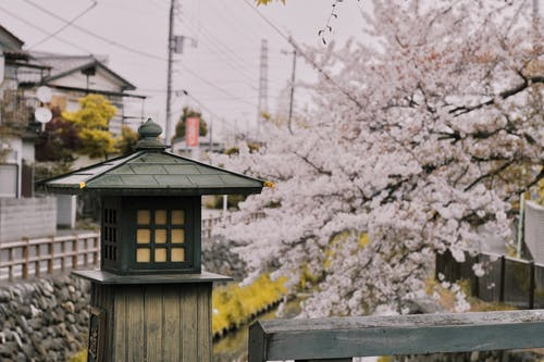 Foto d'estoc gratuïta de fanal, flor, flor de cirerer, Japó