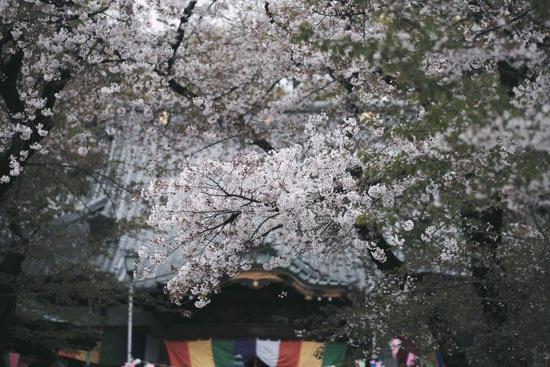 ağaç, bahar, bitki örtüsü
