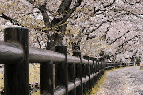 Kostenloses Stock Foto zu flora, holzgeländer, jahreszeit, japan