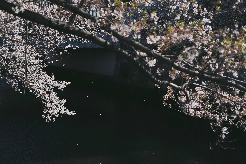 ağaç, çevre, çiçek, ırmak içeren Ücretsiz stok fotoğraf