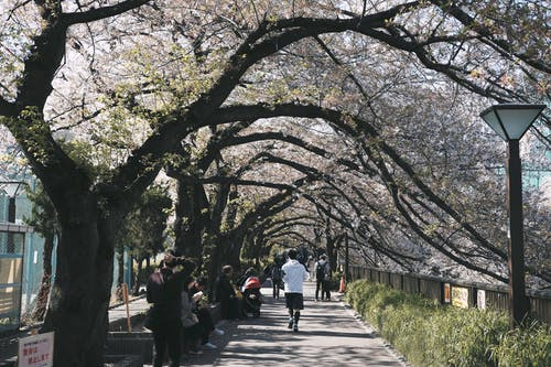 People in Park Surrounded by Cherry Blossoms