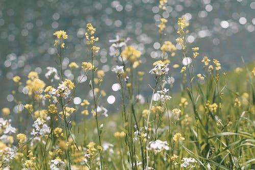 Darmowe zdjęcie z galerii z flora, kwiat, kwiaty, pole