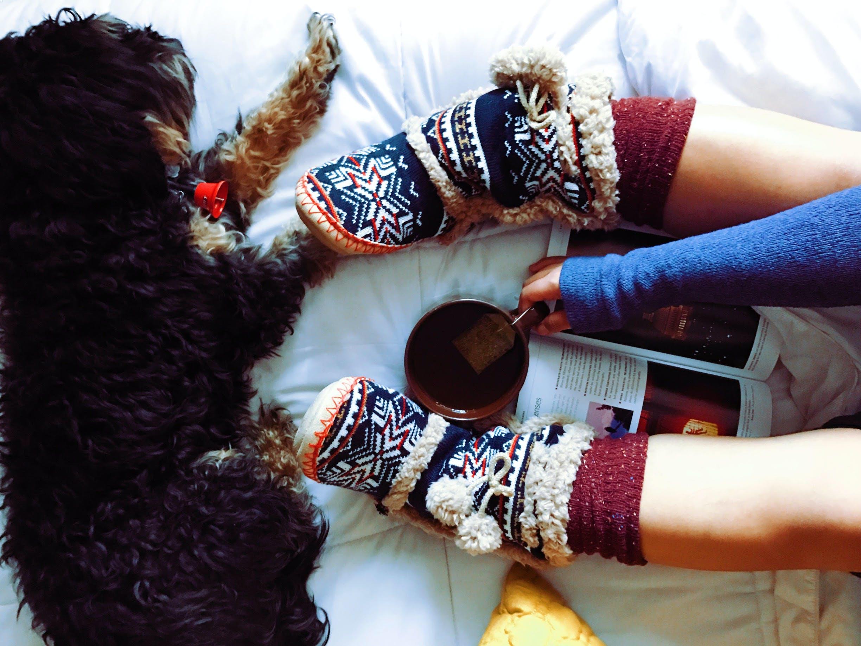 Dog Lying Beside Person on White Comforter While Holding Tea Mug
