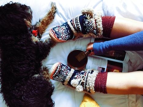 Free stock photo of cup, mug, relaxing, animal