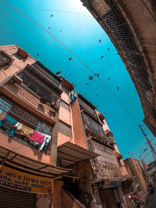 Foto profissional grátis de céu azul, cidade, passarinhos, vista aérea