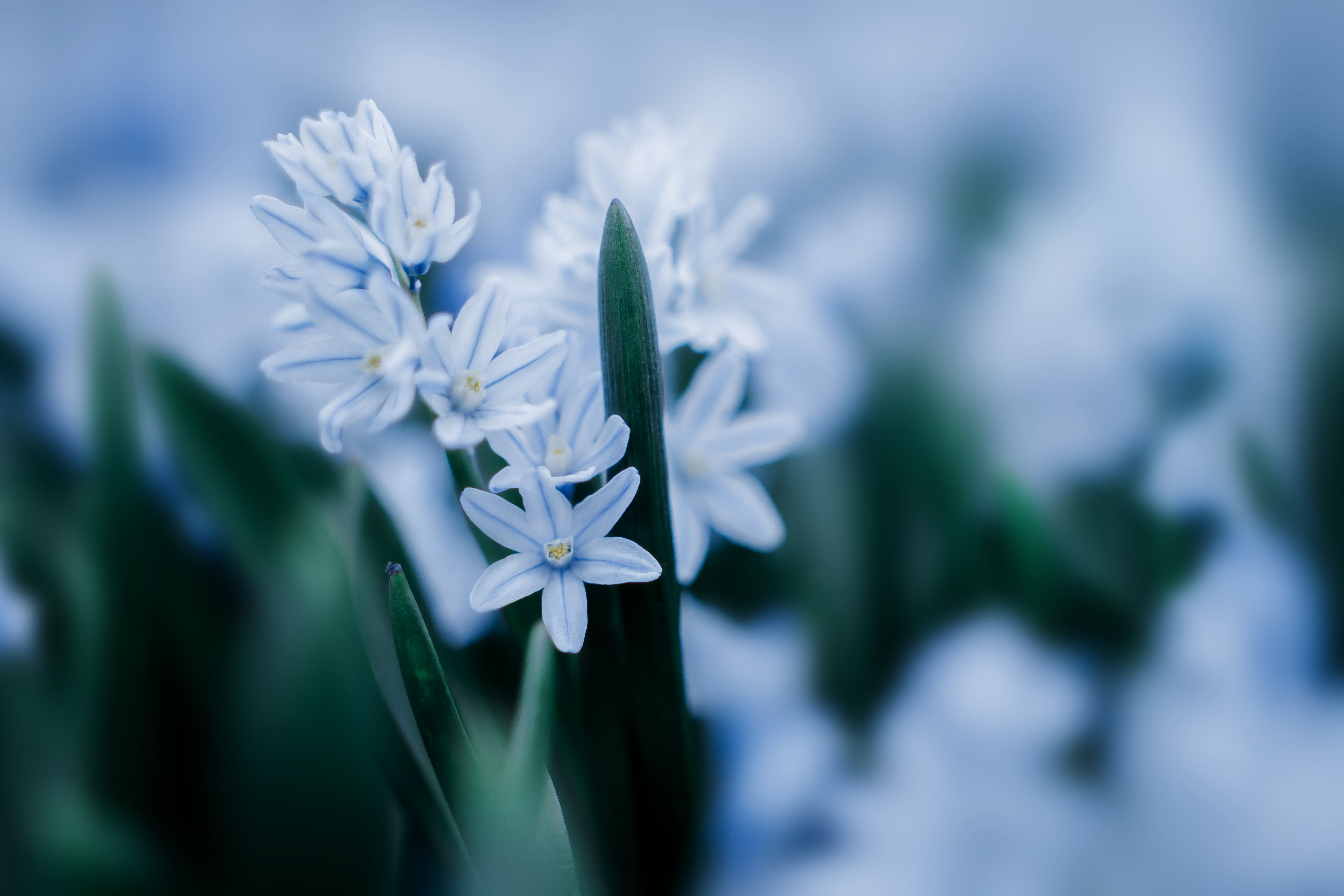 Selective Focus Photogoraphy of White Petal Flowers With Green Sword Leaf