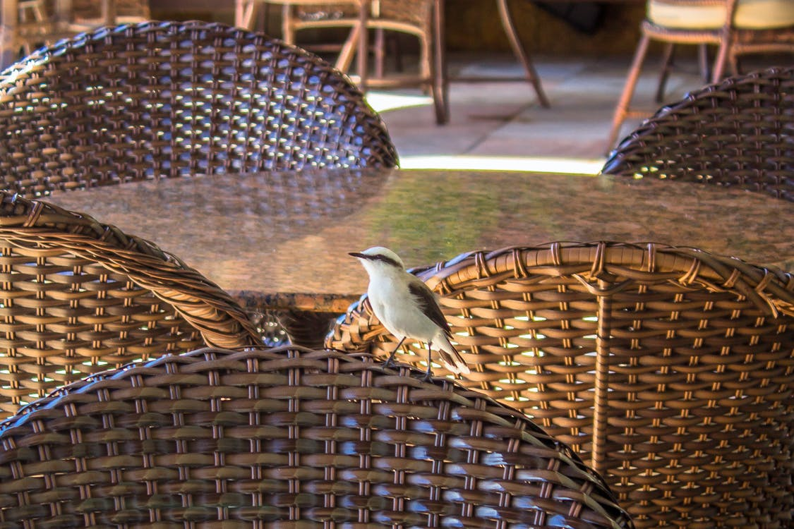 fugl, hotell, natur