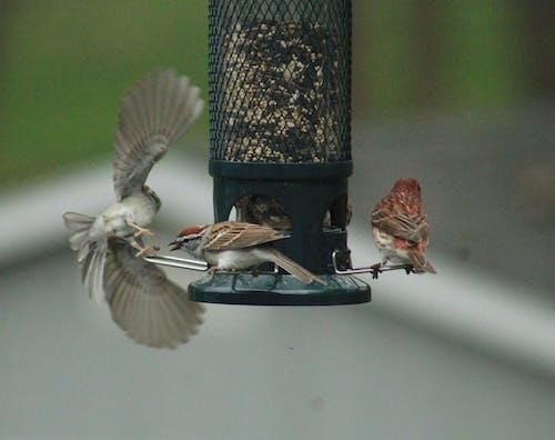 Základová fotografie zdarma na téma pták za letu