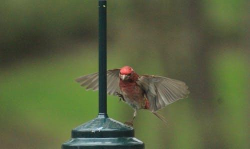 Základová fotografie zdarma na téma přistání ptáků