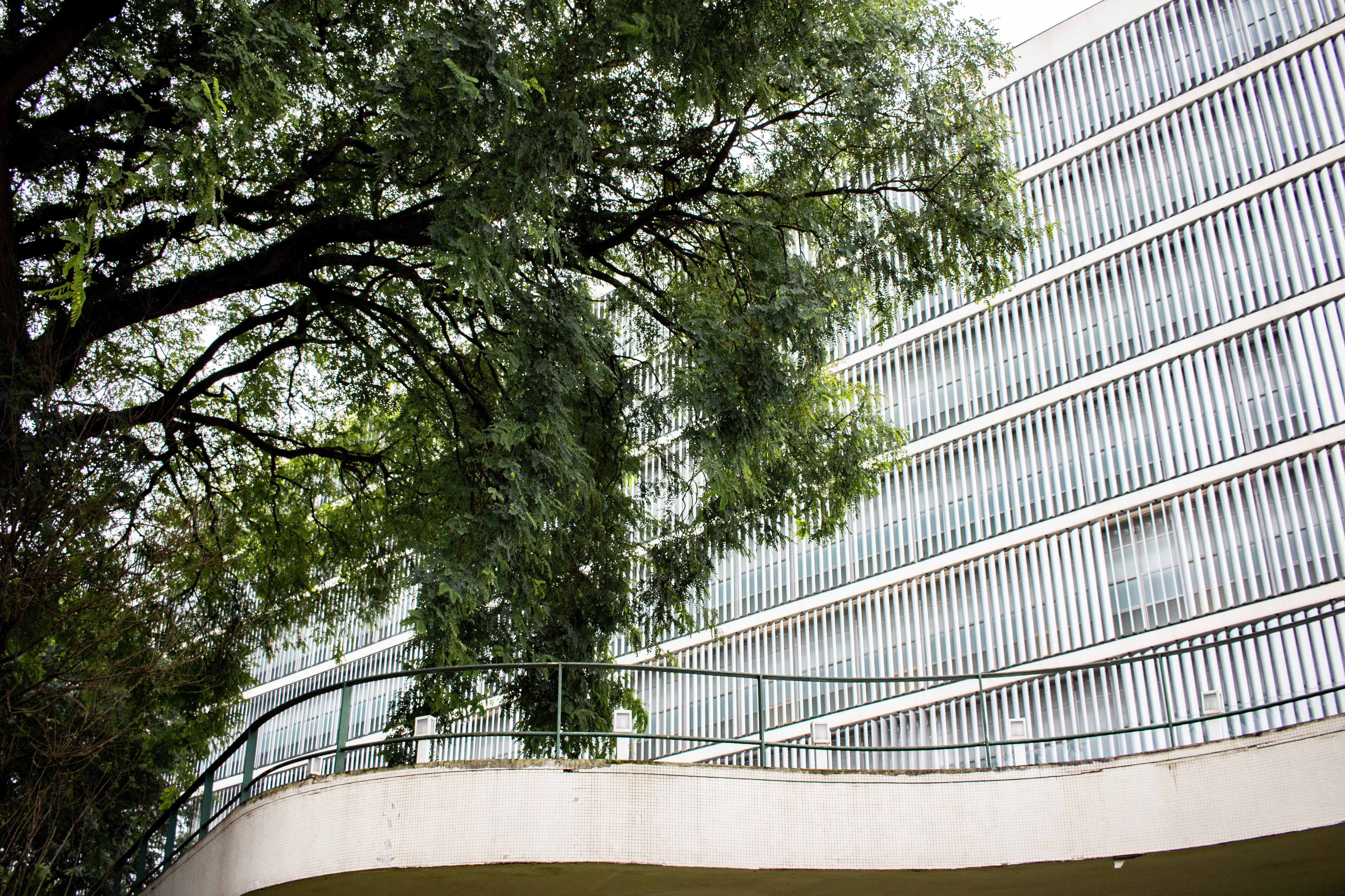 Green-leafed Tree Near Concrete Building