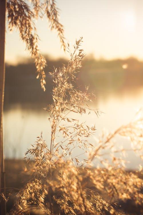 Foto stok gratis botani, hangat & luar biasa, langit emas, lingkungan Hidup