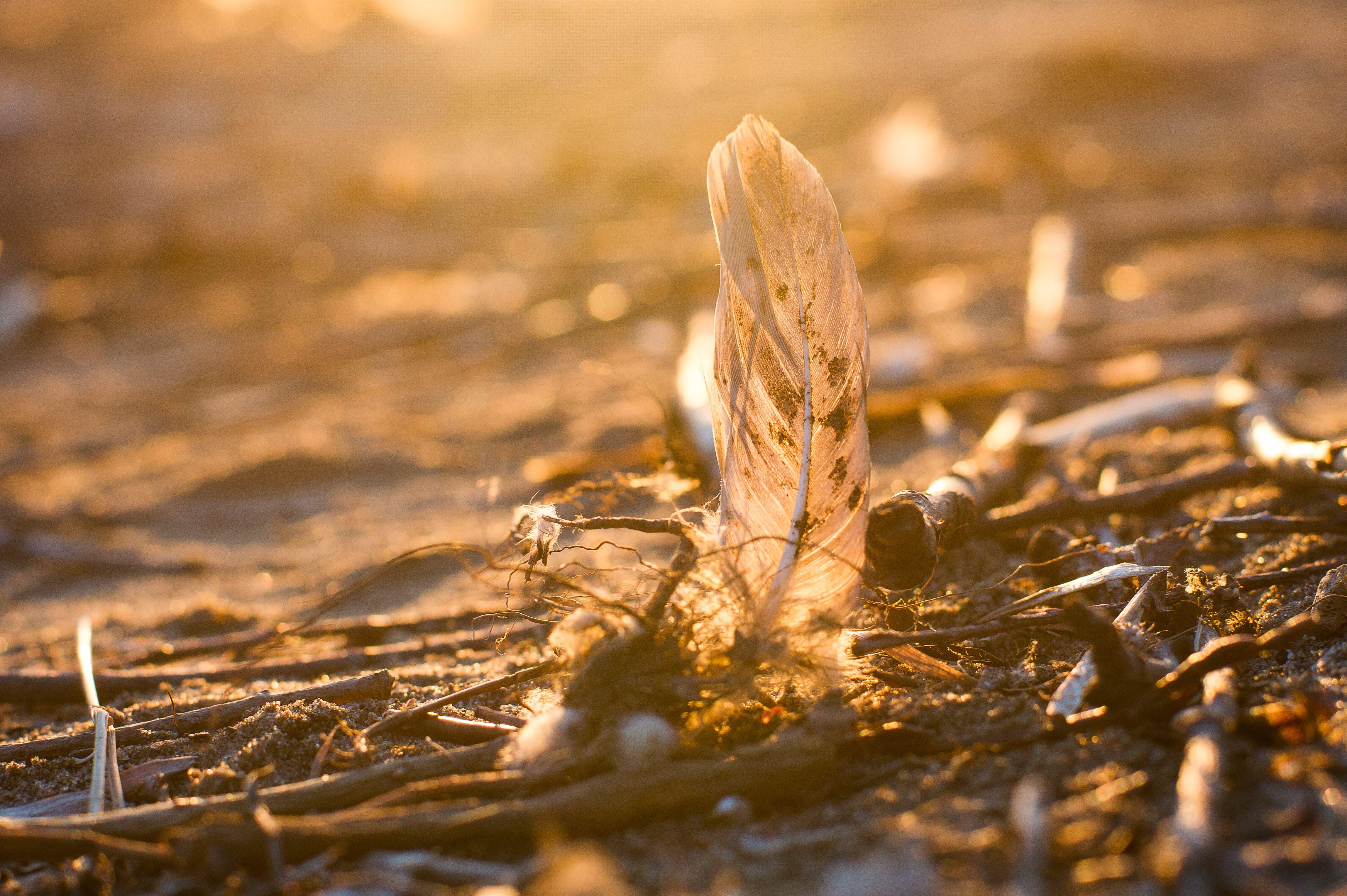 Free stock photo of Beautiful Sunsets, environment, feather, Warm & Wonderful