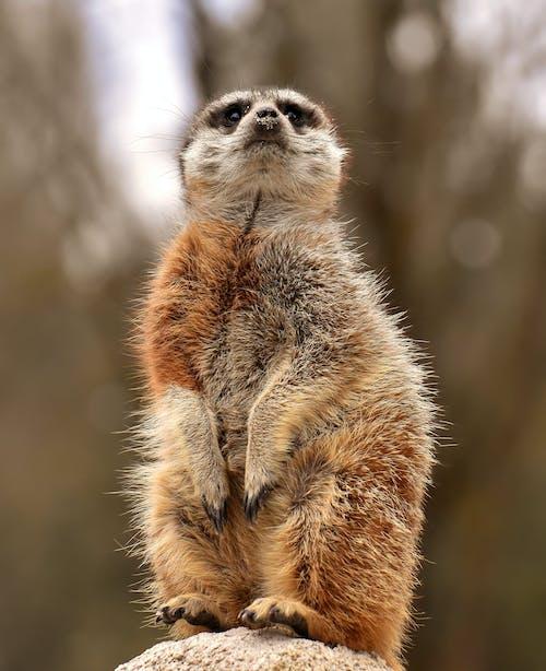 Foto profissional grátis de animais selvagens, animal, cuidado, ecologia