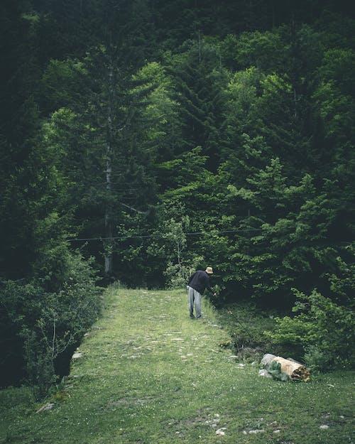 Ilmainen kuvapankkikuva tunnisteilla henkilö, metsä, puut, ruoho