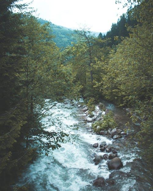 Kostenloses Stock Foto zu bäume, berge, draußen, drohne aufnahmen
