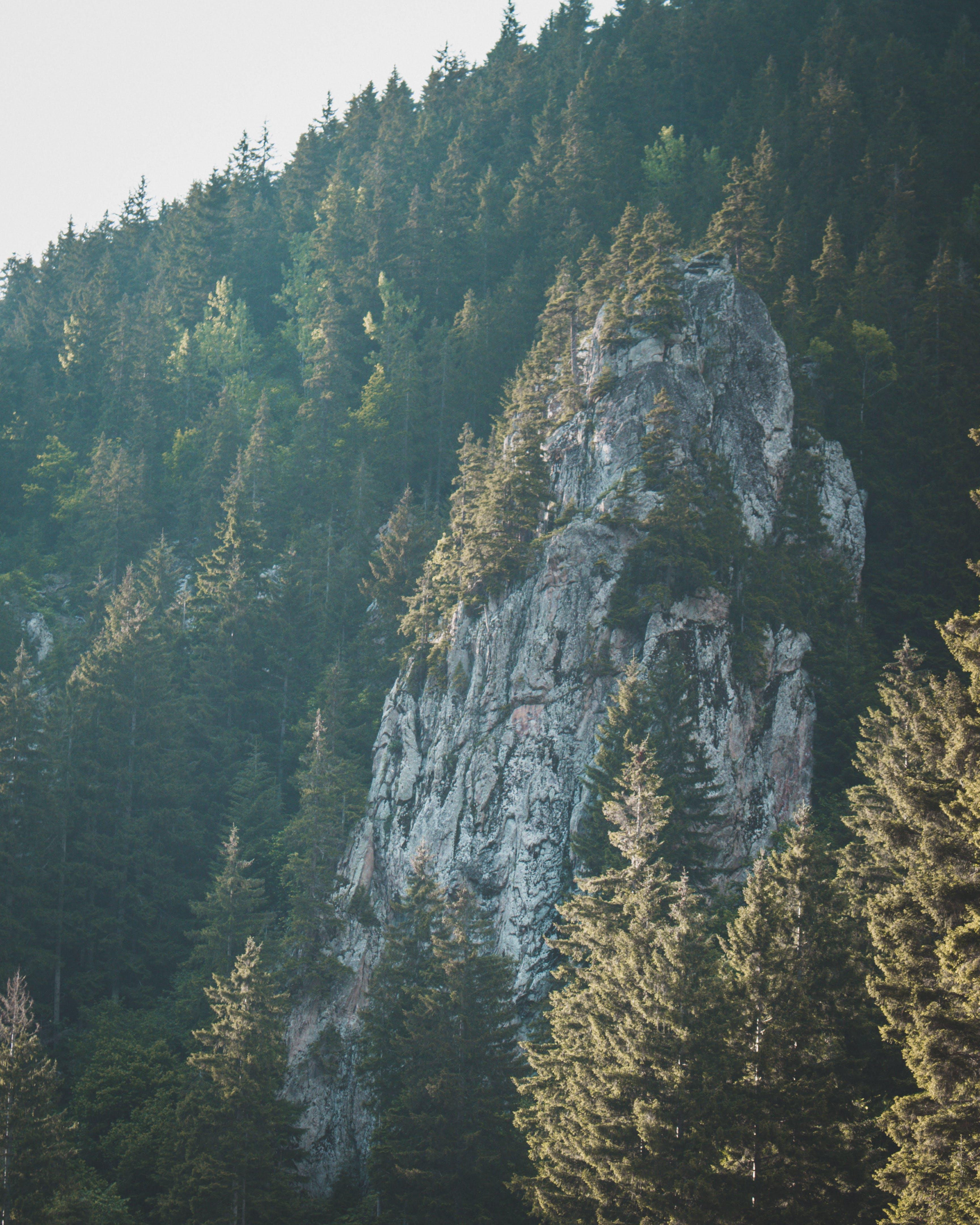 Безкоштовне стокове фото на тему «гора, дерева, краєвид, ліс»