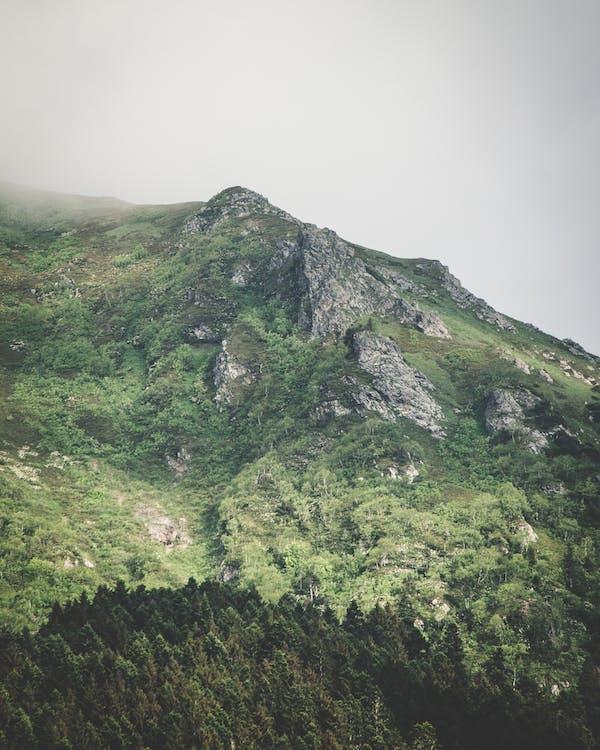 cênico, enevoado, montanha