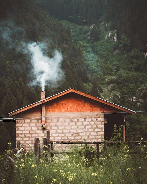 House Near Green Trees