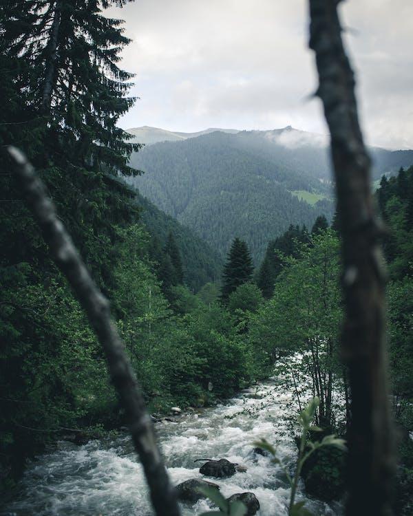 açık hava, ağaçlar, akış