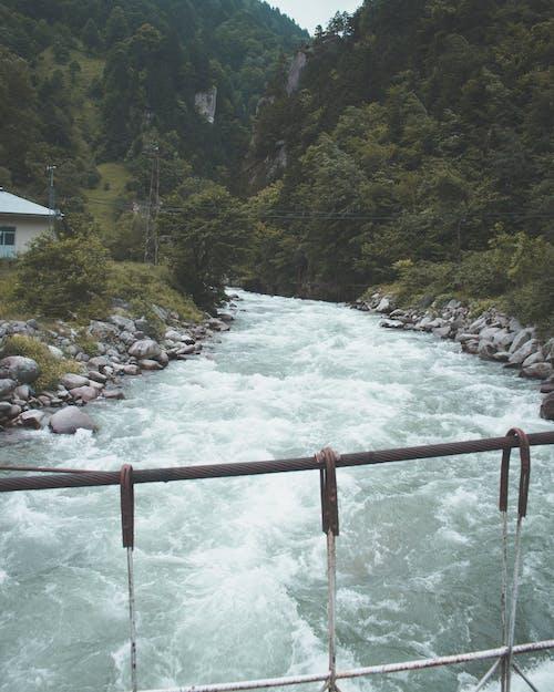 Безкоштовне стокове фото на тему «flpw, вода, гори, Денне світло»