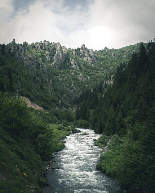 Gratis stockfoto met bergen, bewolkt, bomen, Bos