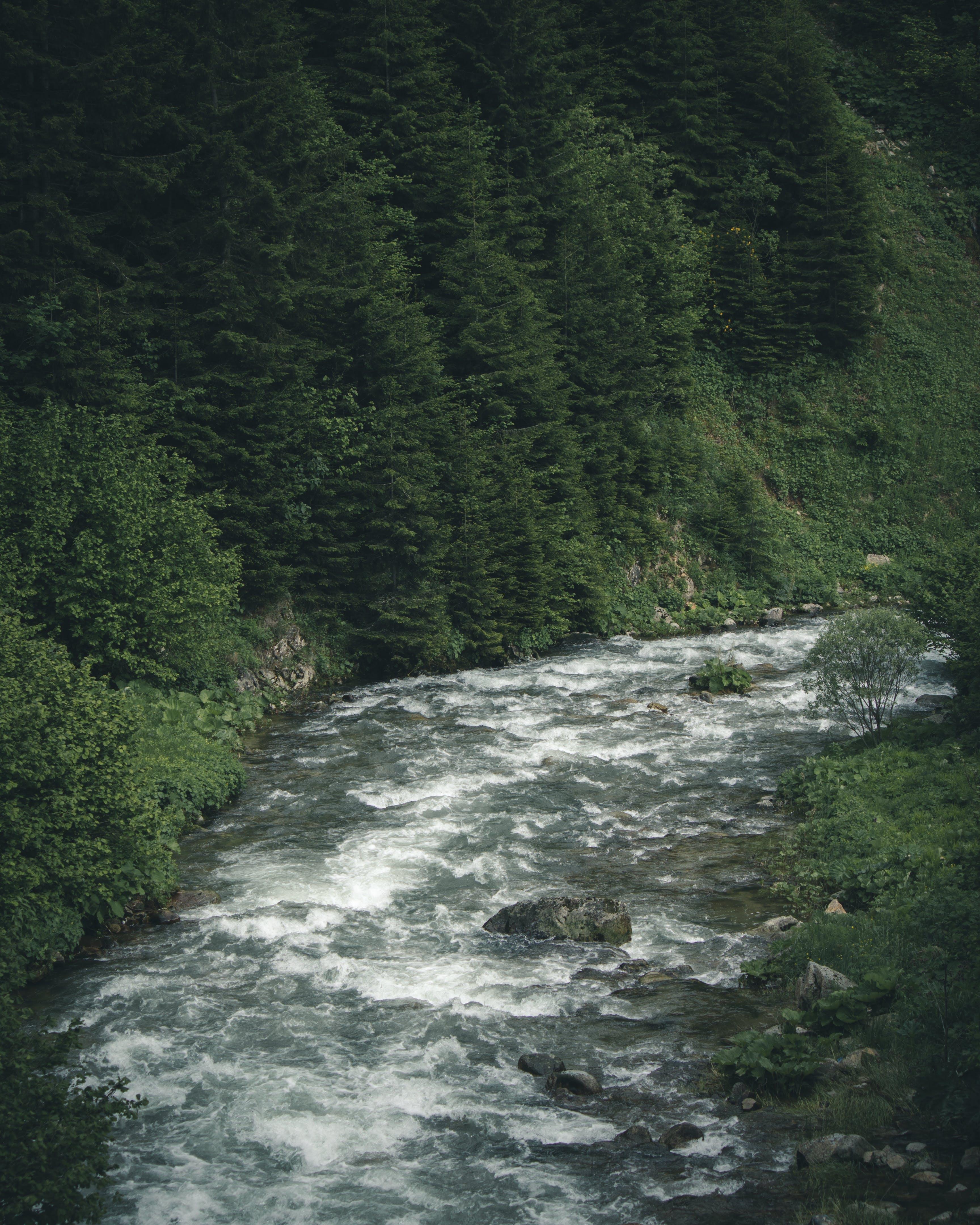 Ilmainen kuvapankkikuva tunnisteilla joki, kivet, kosket, luonto