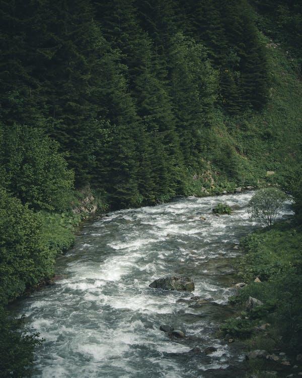 berg, dagsljus, flod