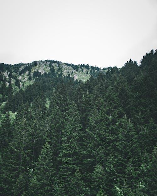 Immagine gratuita di alberi, boschi, esterno, foresta