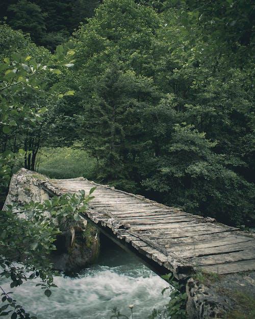 Ingyenes stockfotó folyó, gyaloghíd, híd témában